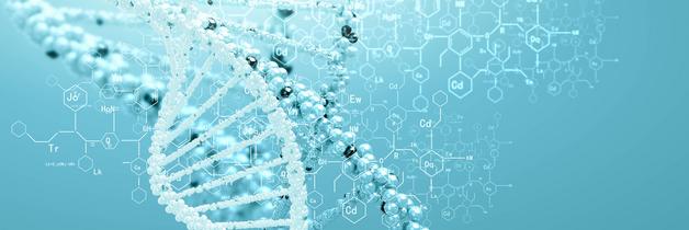 Darstellung eines DNA-Moleküls mit Strukturformeln